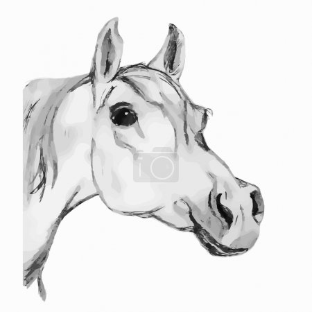 Arabian horse, stallion (head). Gray tone.