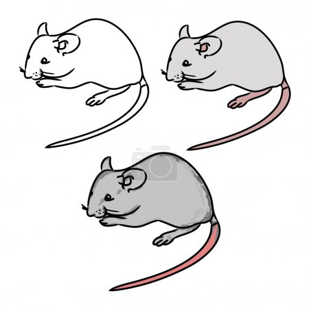 Rat, mouse - sketch, the drawing in color (set 1)