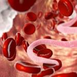 Постер, плакат: Parasite in human blood