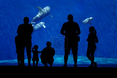 Silhouette of a family watching dolphin.