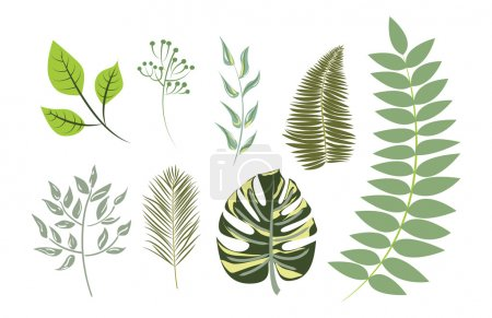 Illustration pour Collection vectorielle de feuilles exotiques. Palmier, Philodendron, Feuille de banane, Fougère, Bouleau - image libre de droit