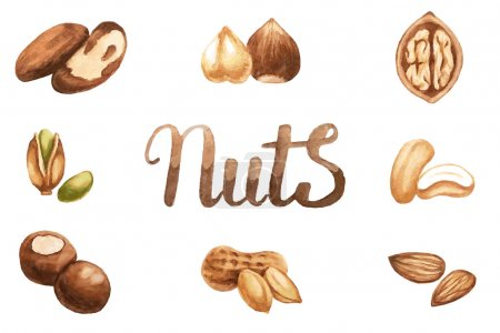Set of nuts by watercolor