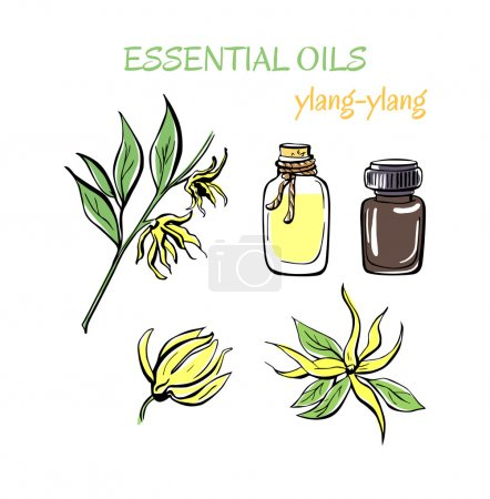 Illustration for Vector illustration of Ylang ylang essential oils, Herbs, flasks and bottles isolated on white background - Royalty Free Image
