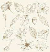 Collection of hand drawn plants leaves