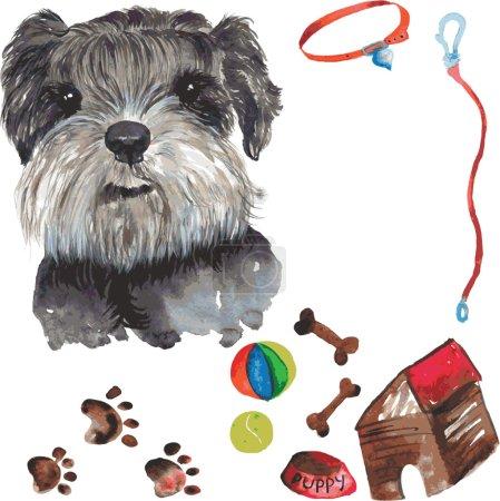 set - miniature schnauzer dog portrait , as well as accessories
