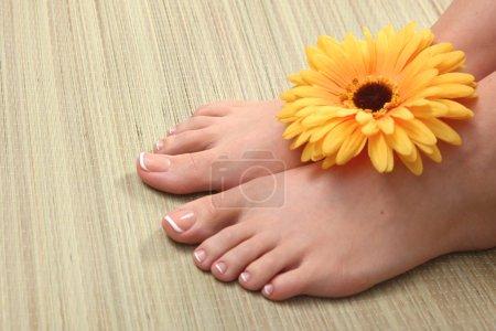 Photo pour Photo de gros plan d'une belle femelle pieds avec pédicure rouge isolé sur blanc - image libre de droit