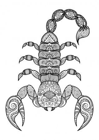 Illustration for Vector illustration of the scorpion in zentangle and ethcnic style. Zodiac symbol. Tattoo, coloring page, t-shirt, card, poster, print design. - Royalty Free Image