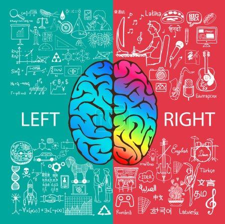 Illustration pour Fonctions cérébrales gauche et droite avec gribouillis . - image libre de droit