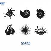 Oceánu stvoření: suchozemští hlemýždi, skořápky, měkkýši