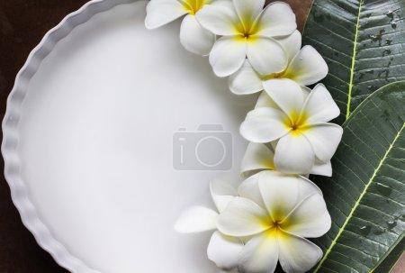 charm and harmonious white flowers plumeria or frangipani