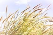 """Постер, картина, фотообои """"Цветок красивый траву в мягкой настроение с сладкий цвета неба"""""""