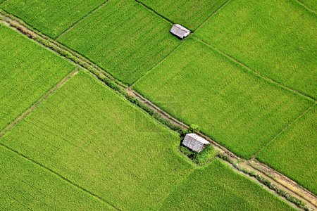 Aerial view of paddy field in Central Thailand