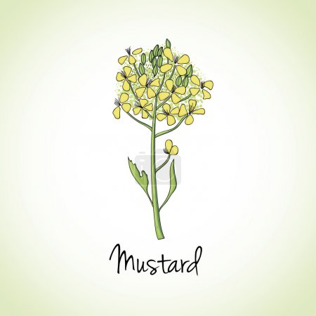 Mustard Herbs and Spices.