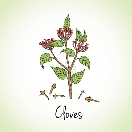 Cloves Herbs and Spices.