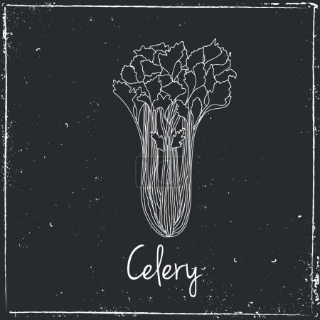 Celery, Herbs and Spices.