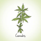 Cannabis herb Herbs and spices