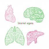 Poster Hand drawn internal organs
