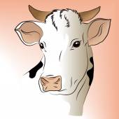 Vector illustration of a white cow