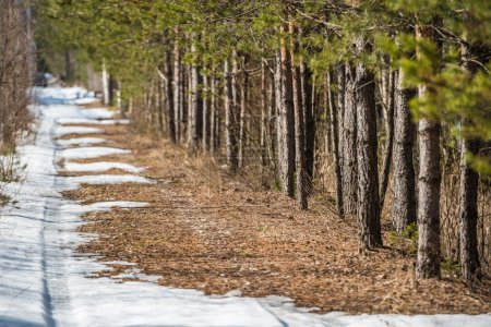 The car trail is disappearing on a melting snow road