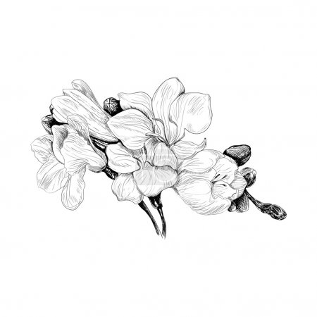 Black and white sketch hand drown illustration of ...