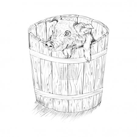 pig in the bucket