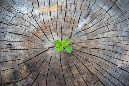 Photo for Green sprout growing from an old stump - Royalty Free Image
