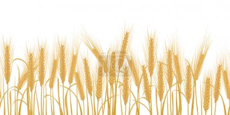 Illustration for Ears of wheat horizontal border seamless pattern Vector illustration - Royalty Free Image
