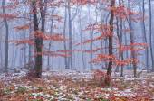 First snow in the misty autumn forest