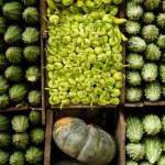 Several varieties of tropical vegetables neatly ar...