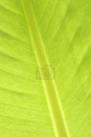 Photo for Fresh green leaves - Royalty Free Image