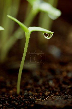 Photo pour Plant Sapling - Nouvelle vie - image libre de droit