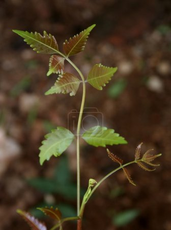 Plant Sapling - New life
