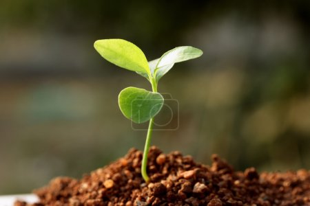 Photo for Plant Sapling - New life - Royalty Free Image