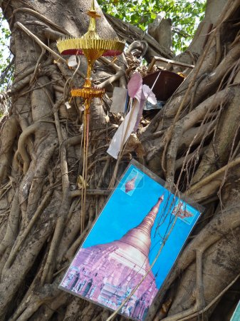 Various religious items stuffed into the limbs of a holy tree in Burma