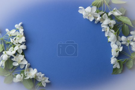 Greeting card with branches of apple blossom on a blue backgroun