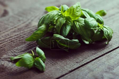 Photo for Green fresh basil on a dark wood background, close up - Royalty Free Image