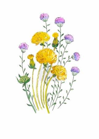 Illustration pour Pissenlit et herbes aquarelle illustration peinte à la main de manière vintage avec des éléments floraux - image libre de droit