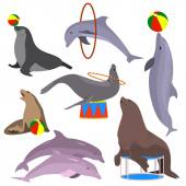 Marine circus animals set Vector illustration Flat