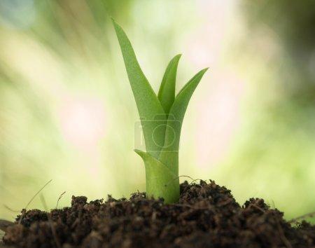 Foto de Sembrar el crecimiento como concepto empresarial del éxito . - Imagen libre de derechos