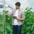 Guy with the tablet slowly inspect plants. Young a...