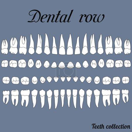 dental row teeth