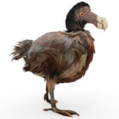 Uccelli dodo