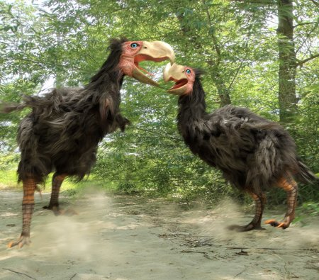 Gastornis Fighting (Terror Birds)