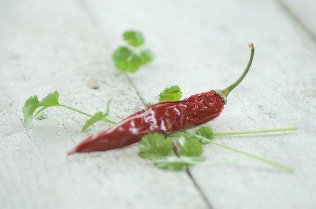 Chili pod and coriander