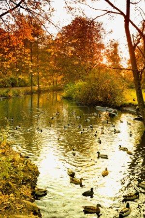 Germany, Hamburg, Park in autumn, Pond with ducks