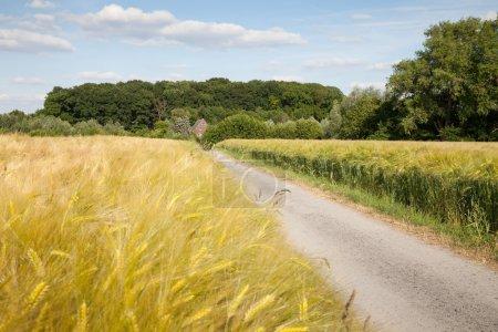 Germany, North Rhine-Westphalia, grain fields, barley fields and