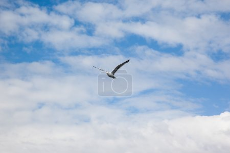 Sea gull in front of cloudy sky
