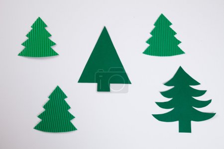 Fir tree, white background