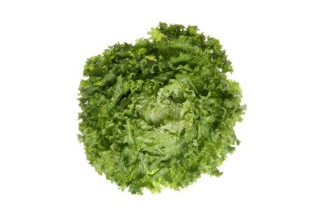 Lettuce (Lactuca sativa var. capitata), close up
