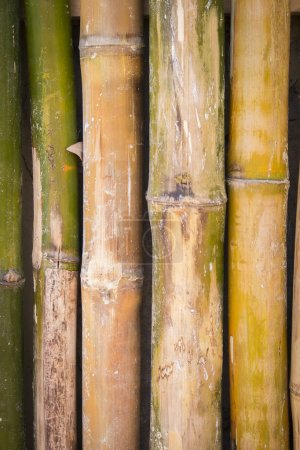 Photo for Bamboo wall from whole logs, weathered wood background - Royalty Free Image